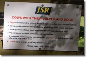 importnant warning for walkers with dogs about cows and calves