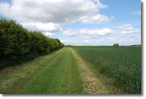 green lane along side of cereal crop