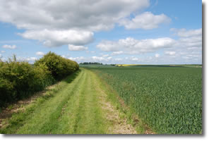 green lane along side of cereal crop continued