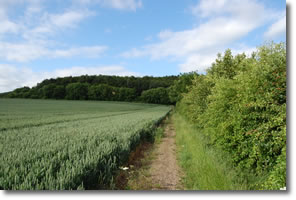 Wolds Way continues along edge of cereal crop